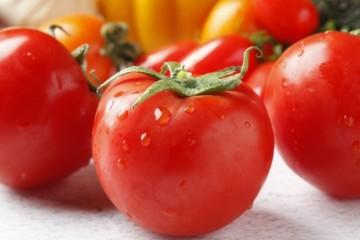 2020年大棚番茄种植技术:怎么避免出现卷叶黄叶问题?