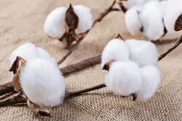 继续深化农业供给侧结构性改革 新疆推进稳粮优棉等农业建设