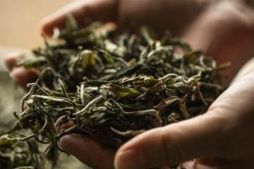 2020年做卖茶叶的生意可行吗?利润怎么样?