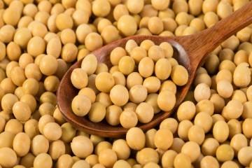 2020年大豆的市场前景怎么样呢?2020年的大豆价格会上涨吗?