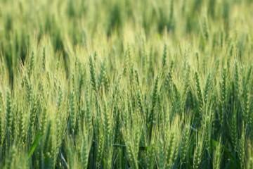 什么是农业防治?农业防治的措施有哪些?