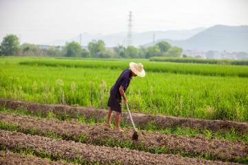 公安部依法严厉打击制售假劣农资、危害食品安全等领域犯罪