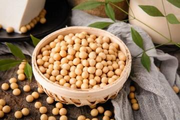 亩产2000斤的超级大豆是真的吗?大豆怎么才能够高产?