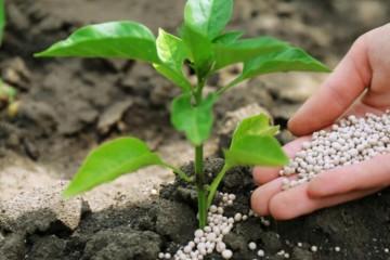 怎么自制肥料?可以用哪些材料制作?