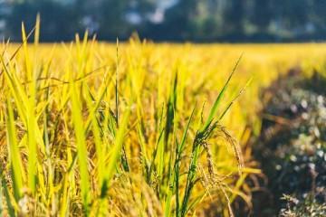 农村土地种什么赚钱快?受欢迎的农产品有哪些?