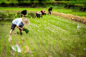 什么是生态农业模式?生态农业模式主要有哪些?