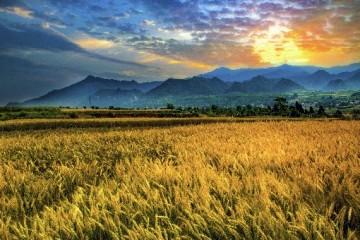 农民是一种职业吗?未来农业的发展趋势是怎样的?