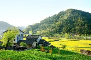 实现乡村振兴,广西打造农村发展新模式