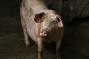 农业农村部部长韩长赋在河北调研,要求抓好夏粮田管,加快恢复生猪生产