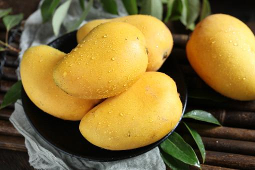 芒果可不可以进行盆栽?食用芒果的作用和禁忌有哪些?