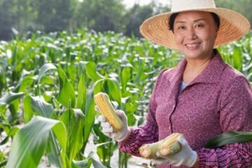 人大代表建议:持续加大对新型农业经营主体的政策支持