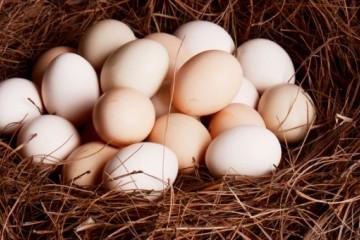 山东鸡蛋价格创年内新低,蛋鸡养殖户该怎么办?
