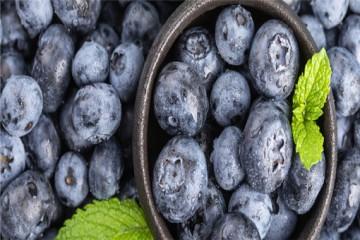 蓝莓好种吗?适合在什么地方种植?