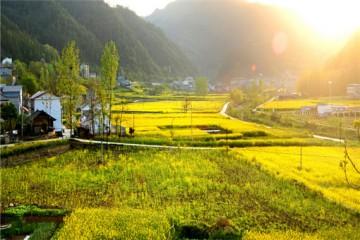 2020年乡村旅游扶持政策有哪些?快来了解下吧!