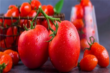 如何种植蕃茄才能个头大口感好?有哪些关键技巧?