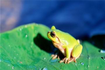 养青蛙赚钱吗?养殖注意事项有哪些?