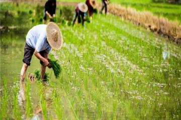 生态保护红线、永久基本农田、城镇开发边界具体指什么?