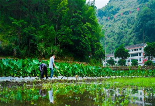 农村发展16 (2)