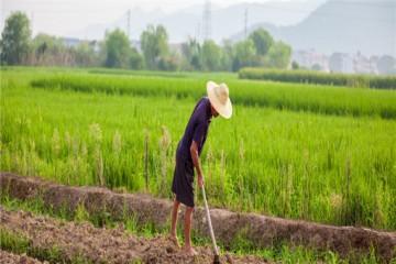 粮改饲每亩补贴多少?哪些人可以领取补助?