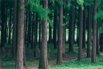 我国林地产权是有多久?产权到期可以续吗?