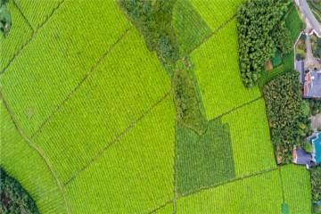 土地承包权转让政策:转让必须满足什么条件?