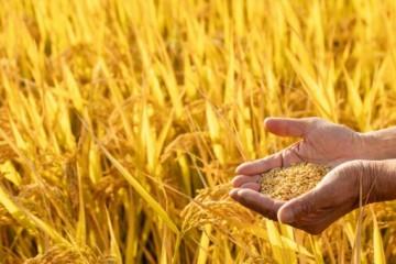 个人农业补贴怎么查询?一般什么时候发放?