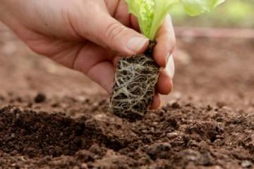 农民朋友注意了,搞农业生产要重点关注这16项政策!