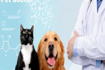 兽医的工作前景怎么样?一般兽医月薪多少?