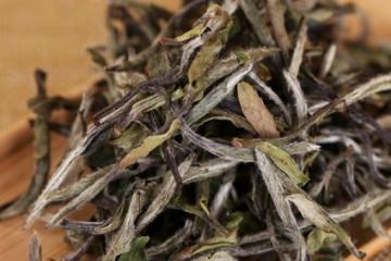 什么是白茶?白茶的产地、类型、制作与功效详解!