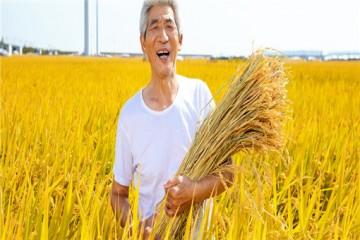 新型职业农民职称申报,要满足哪些条件?
