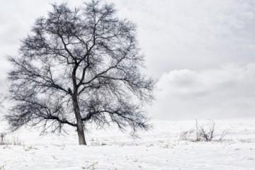 """2021寒潮来袭,多地被""""冻哭""""!你的低温津贴有着落吗?"""