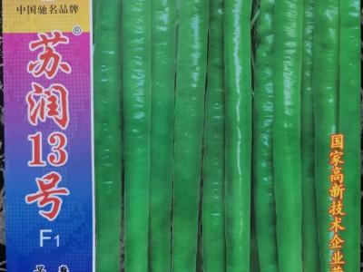 苏润13号线椒种子