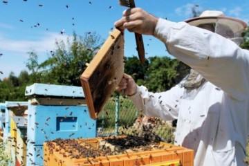 新手怎样学养蜜蜂?可以试试从这5个方面着手!