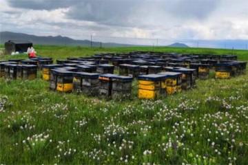 养蜂知识:蜂箱多久开箱检查一次合适?