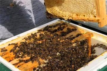养蜂知识:蜂箱为什么要盖覆布?