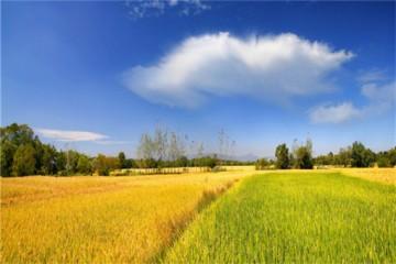 生态循环农业的的发展重点是什么?这5点值得关注!