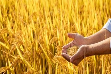 """国家扶持!""""农产品产地初加工""""新政策发布!"""