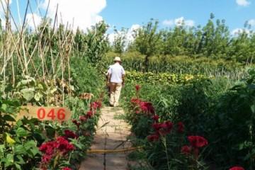 2021年亲子农庄怎么做?可以参考这3种模式!