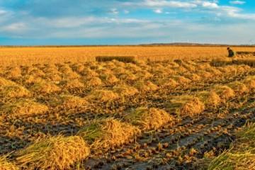 2021年家庭农场、合作社流转的土地可有抵押贷款吗?