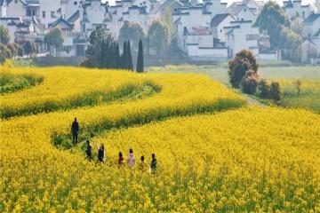 为什么发展休闲农业必须有产业支撑?看了这些原因你就清楚了!