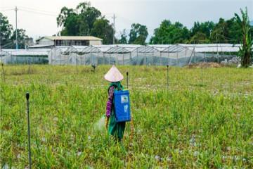 萧县2021年新型职业农民培训,有哪些政策内容?
