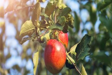 可持续农业是什么?发展要点有哪些?