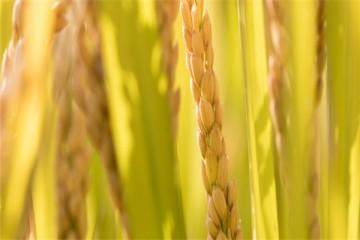 生鲜产品供应链有哪些特点?该怎么发展?