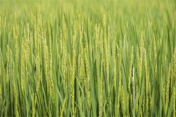 实施乡村振兴,怎么发展特色产业?农业农村部这样指示