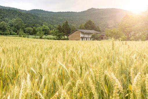 2021年玉米大豆稻谷补贴标准-摄图网